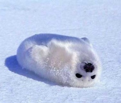 Upside down Seal
